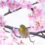 桜,花見,センチュリー21,中央ハウジング